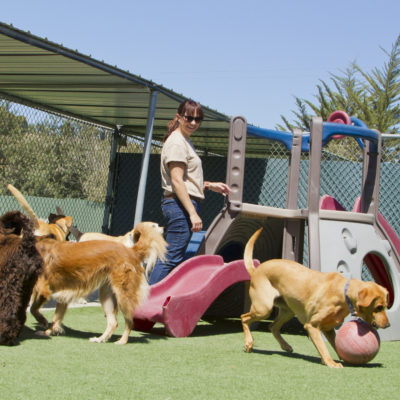 Puppy Paradise: The Keys to Starting a Doggy Daycare