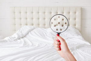 Tips to keep your mattress clean and bug-free