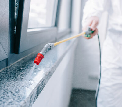 Reasons Pest Control Businesses Are Essential to Homeowners